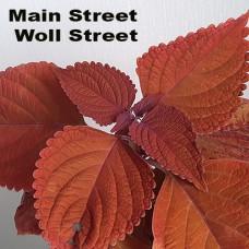 Main Street Woll Street